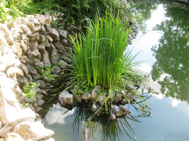 iunie 2014 gradina botanica 023